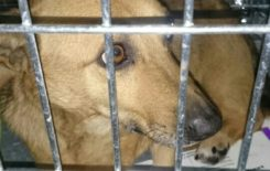 Więcej o: Znaleziono psa w Stawiszynie