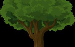 Więcej o: Wycinka drzew – zmiany od 17 czerwca 2017 r.
