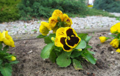 Więcej o: Wiosna zawitała do Gminy i Miasta Stawiszyn